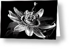 Passion Flower In Black And White Greeting Card
