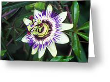 Passion Flower (passiflora Sp.) Greeting Card by Kaj R. Svensson