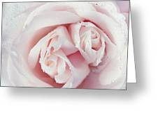 Passion For Flowers. One Rose Two Hearts Greeting Card