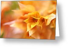 Passion For Flowers. Orange Delight Greeting Card