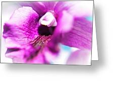 Passion For Flowers. Orchid Close Up Greeting Card