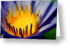 Passion Is Energy Greeting Card