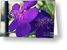 Passion Purple Greeting Card