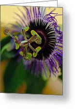 Passionate Flower Greeting Card