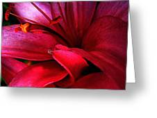 Passionate Lily Greeting Card