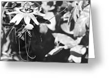 Passionflower And Tendrils Greeting Card