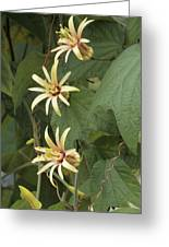 Passionflower Greeting Card by Archie Young
