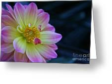 Pastel Dahlia Greeting Card