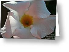 Pastel Mandevilla Greeting Card
