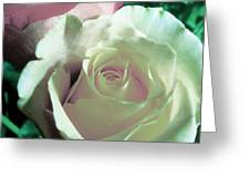 Pastel Pink And White Rose Greeting Card