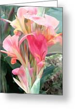 Pastel Pink Cannas Greeting Card