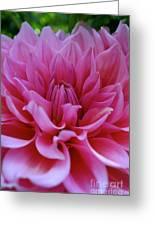 Pastel Pink Dahlia Greeting Card