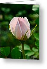 Pastel Rose Petals Greeting Card