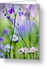 Pastel Wildflowers Greeting Card by David Lade
