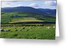 Pastoral Scene Near Anascual, Dingle Greeting Card