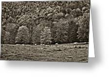 Pastoral Sepia Greeting Card