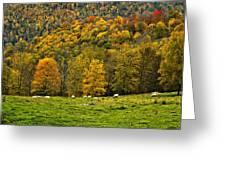 Pastoral Greeting Card