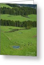 Pastures In Azores Islands Greeting Card