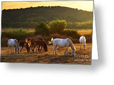 Pasturing Horses Greeting Card