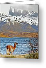 Patagonia Greeting Card