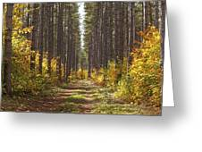 Path Into The Forest In Autumn Sault Greeting Card