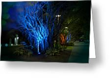 Path Of The Living Trees Greeting Card
