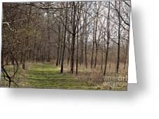Path Of The Trees Greeting Card