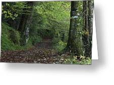 Path Through The Woods Inistioge Greeting Card