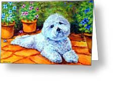 Patio Pal - Bichon Frise Greeting Card