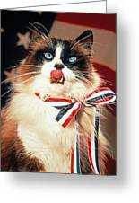 Patriotic American Ragdoll Greeting Card