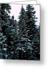 Pat's Winter Trees 1d Greeting Card