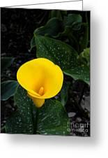 Paute Farm Yellow Stunner Greeting Card