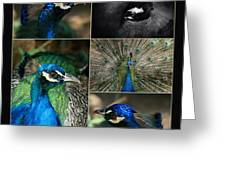 Pavo Cristatus IIi The Heart Of Solitude  - Indian Blue Peacock  Greeting Card