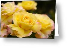 Peace Rose 2 Greeting Card
