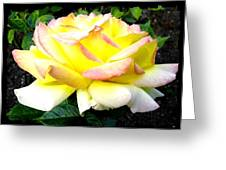 Peace Rose- Okanagan Valley Greeting Card