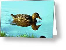 Peaceful Duck - 0993c2502e Greeting Card