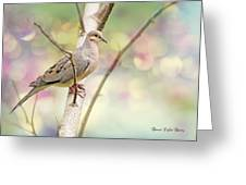 Peaceful Mourning Dove Greeting Card