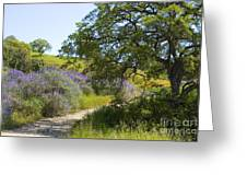 Peaceful Path Greeting Card
