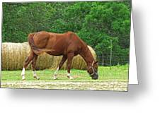 Peacefully Grazing Greeting Card
