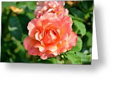 Peach And Yellow Ruffled Greeting Card