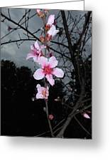 Peach Blooms Greeting Card