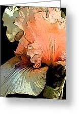 Peach Iris Digital Art Greeting Card