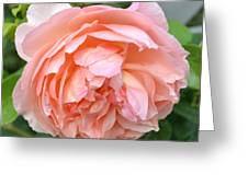 Peach Peony Flower Greeting Card