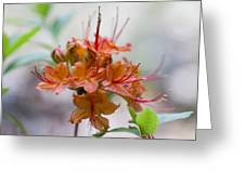 Peachy Alabama Azalea Greeting Card