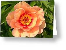 Peachy Blush Greeting Card