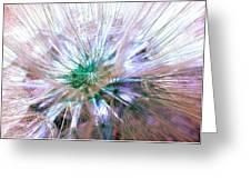 Peacock Dandelion - Macro Photography Greeting Card
