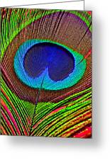 Peacock Feather Close Up Greeting Card by Garry Gay