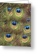 Peacock Feather Eyes Greeting Card