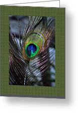 Peacock Feather Ll Greeting Card