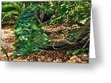 Peacock Hiding Greeting Card